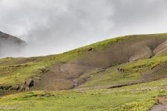 Alpage du Rawyl